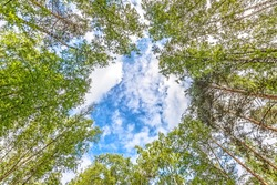 nature forest landscape with window through trees against clouds sky background Wide overhead top up view of hole in wood towards sky Pine tree mixed woodland Natural color of nature