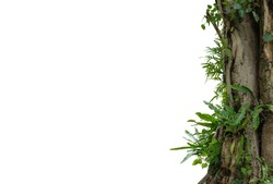 Nature frame of jungle trees with tropical rainforest foliage plants isolated on white background with clipping path.
