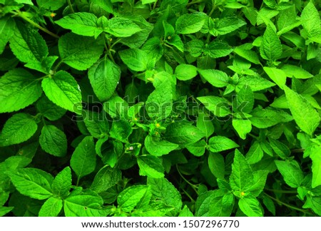Nature Fresh Green Leaf on the garden background texture