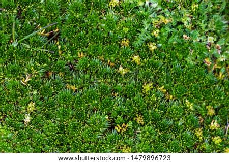 nature, green, birts, rivers, spirals, colors, fractals  #1479896723