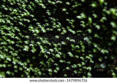 nature, green, birts, rivers, spirals, colors, fractals  #1479896726
