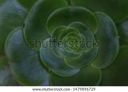 nature, green, birts, rivers, spirals, colors, fractals  #1479896729