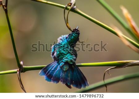nature, green, birts, rivers, spirals, colors, fractals  #1479896732