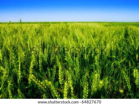 Nature - green field