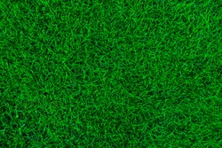 Nature green grass background top view