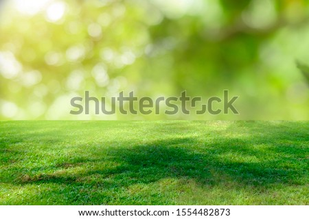 Nature green grass with bokeh background.