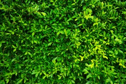 Nature green leaves pattern background