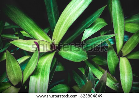 Nature Green Leaves texture background . #623804849
