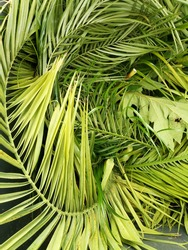 Nature green palm leaves textured background. Organic. Healthy life. Tropical plants