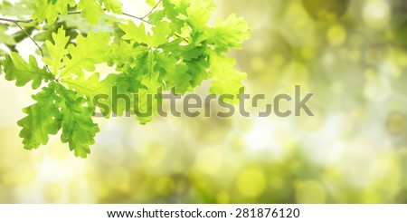 Nature green summer background with oak branch #281876120