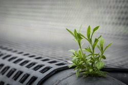 nature grows in a little urban hole
