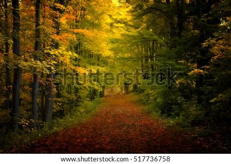 nature III #517736758