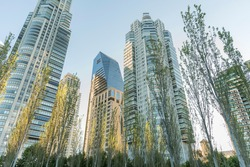 Nature in the city: trees and buildings of modern architecture in the exclusive Puerto Madero neighborhood, in Buenos Aires, Argentina. Low angle view.