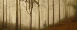 Nature landscape in Kodaikanal, India.