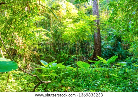 Nature landscape of tropical jungle forest with green lush foliage #1369833233