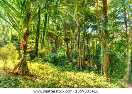 Nature landscape of tropical jungle forest with green lush foliage #1369833416