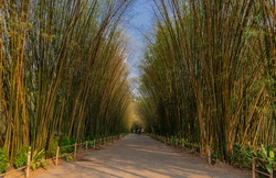 Nature landscape view of Tunnel bamboo with natural light. Green bamboo tunnel in tropical rainforest at Nakhonnayok. No focus, specifically.
