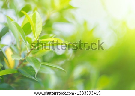 Nature leaf green in the garden.Concept organic leaves green and clean ecology in summer sunlight plants landscape. bokeh blurred bright green use texture wallpaper natural background.selective focus. #1383393419