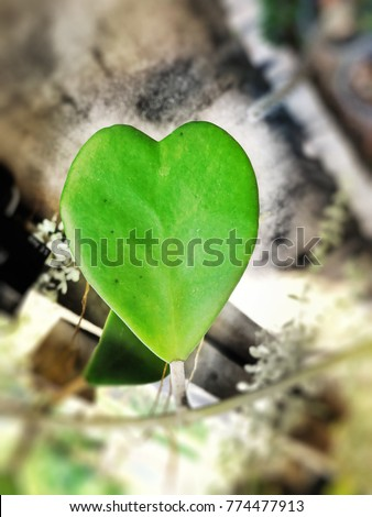 Nature love symbol by green leaf of heart shape with copy space for text design ,Love concept background/wallpaper/card/holiday #774477913