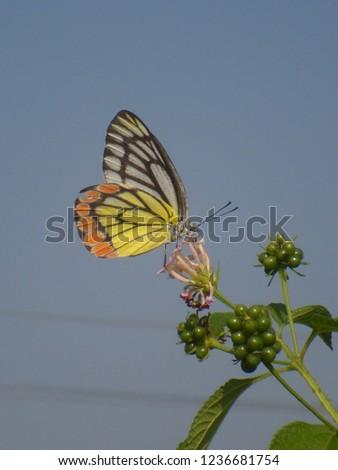 Nature Macro Photography