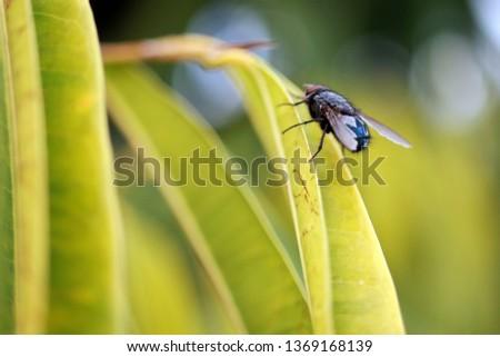 nature macro photography #1369168139