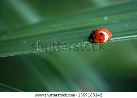 nature macro photography #1369168142