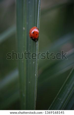 nature macro photography #1369168145