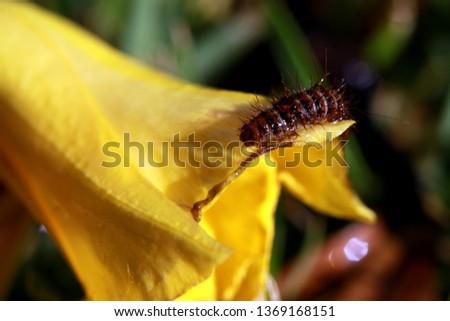 nature macro photography #1369168151