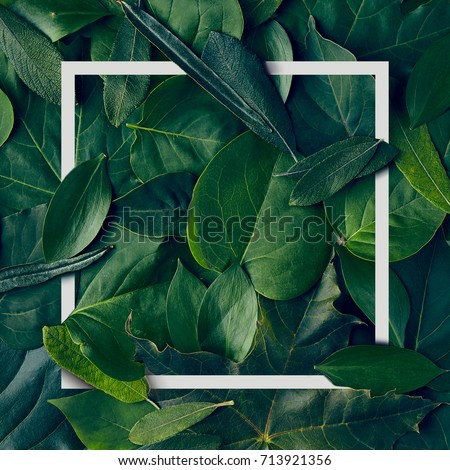 Nature Minimal Concept - Green Leaves Background with White Paper Frame. Flat Lay