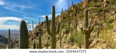 Nature Mountain Landscape - Hiking Adventures at Catalina State Park, views of beautiful Saguaro Cactus on a mountain side, background of a cloudy blue sky, and  Oro Valley In - Arizona.