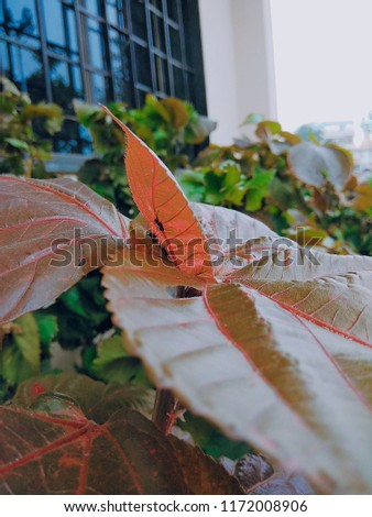nature nature nature #1172008906
