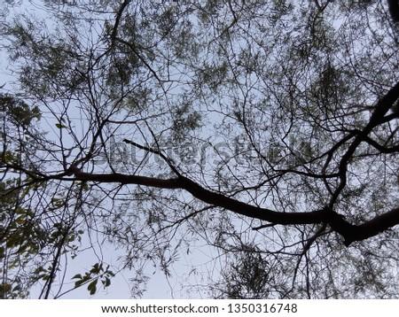 Nature Nature Nature #1350316748