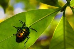 Nature nurtures every living organism
