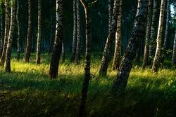 Nature of Europe - Ukraine. Park in summer sunset. Low light image.