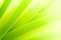 Nature of green leaf in garden at summer. Natural green leaves plants using as spring background cover page environment ecology or greenery wallpaper