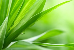 Nature of green leaf with rain drop in garden at summer. Natural green leaves plants using as spring background cover page environment ecology or greenery wallpaper