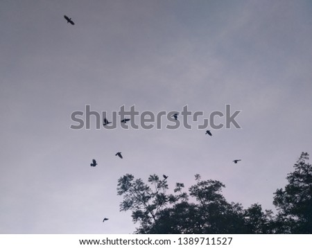Nature of love  A flock is a gathering of a group of same species animals in order to forage or travel with one another. In avians flocks are typically seen in association with migration. While this i #1389711527