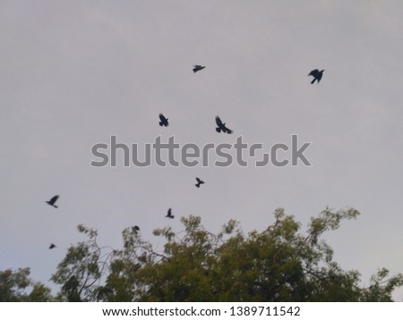 Nature of love  A flock is a gathering of a group of same species animals in order to forage or travel with one another. In avians flocks are typically seen in association with migration. While this i #1389711542