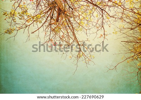 nature of vintage tree flower...