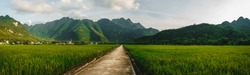 Nature panoramic landscape: Terraced rice field with rural road in Lac village, Mai Chau Valley, Vietnam, Southeast Asia. Travel and nature concept.