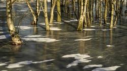 Nature parc Oranjezon near Vrouwenpolder-Zeeland  in a white winter session