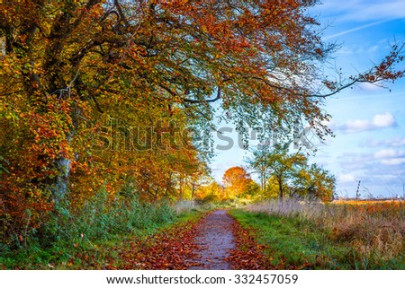 nature path in the fall with...