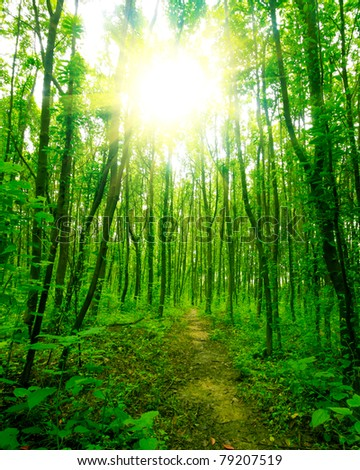 nature. pathway in the forest with sunlight #79207519