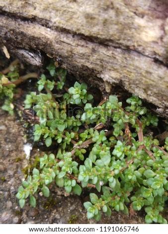 Nature photo ever green world