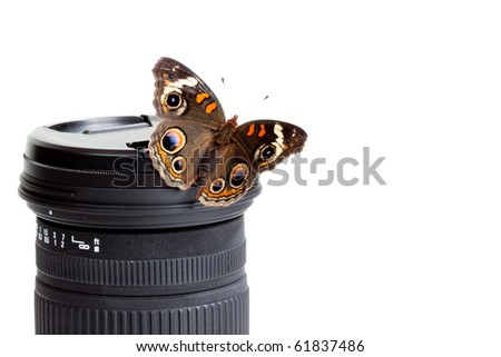 Nature Photography - Buckeye Butterfly isolated on a camera lens