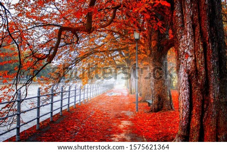 Nature pic of red leaves fall