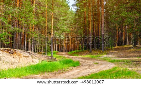 Nature pine forest with sandy road at summer. Nordic scandinavian pine forest in evening light. Pine forest Europe. Nature concept.