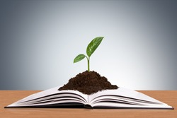 Nature plant in soil growing in book on wooden table.
