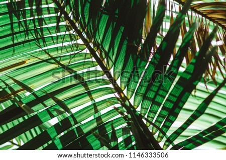 Nature poster. Green palm branch. Closeup. Tropical vibes of greenery,
