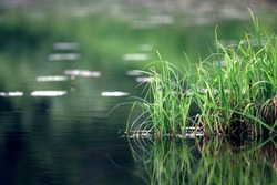 nature purity grass on the river bank